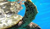 Seychelles, Giant Tortoise - Praslin Island