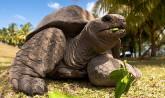 Seychelles - Giant Tortois, Valle de May, Praslin Island