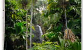 Seychelles -  Valle de May, Praslin Island
