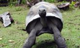 Seychelles, Giant Tortois - Praslin Island