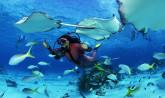 Seychelles, diving